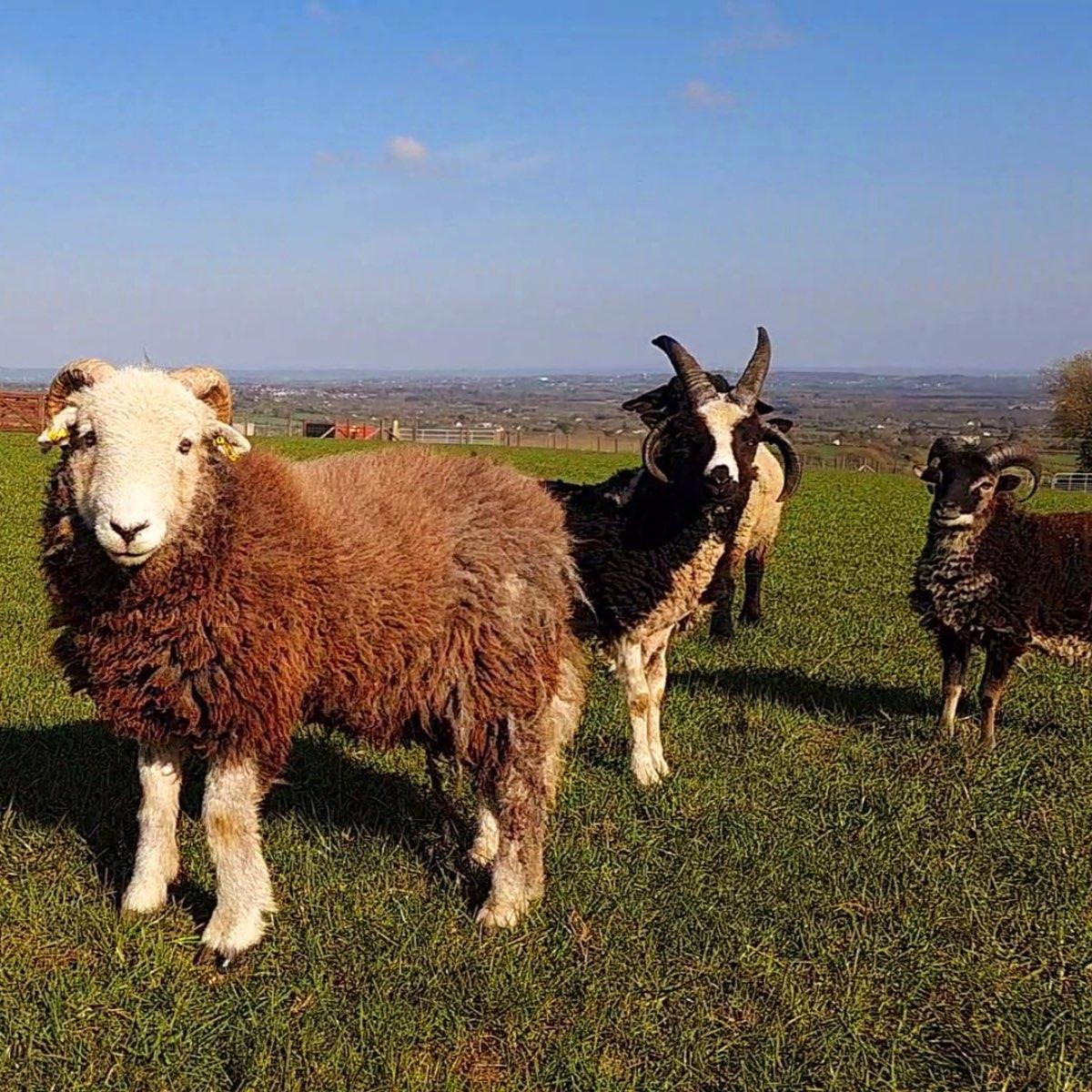 Glenshane Country Farm 1