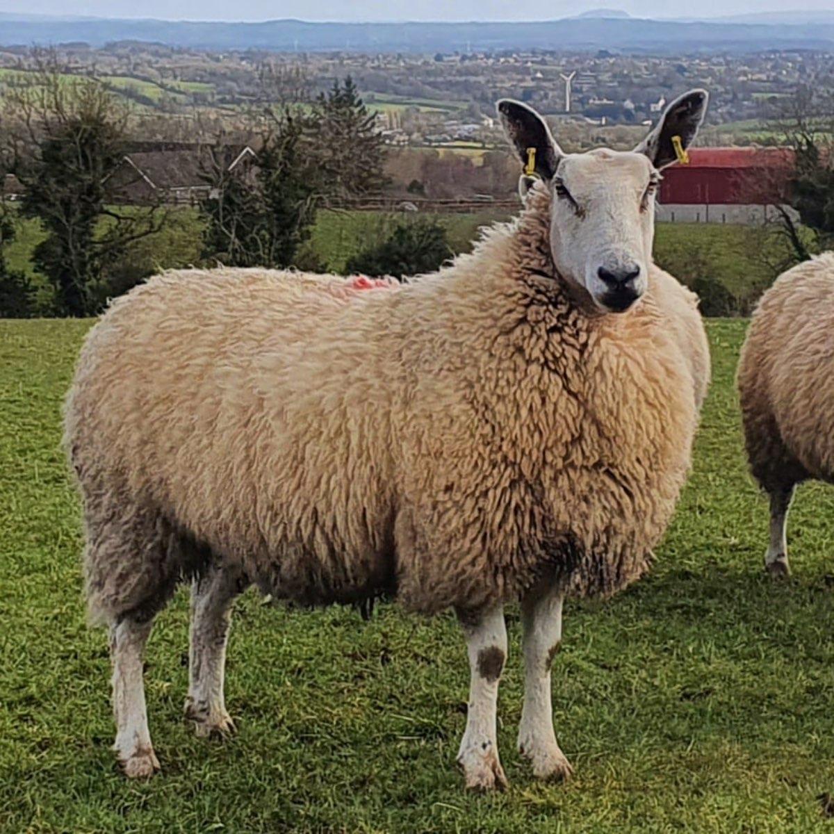 Glenshane Country Farm 13