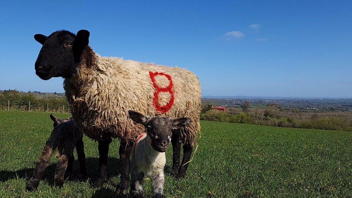 Glenshane Country Farm 15