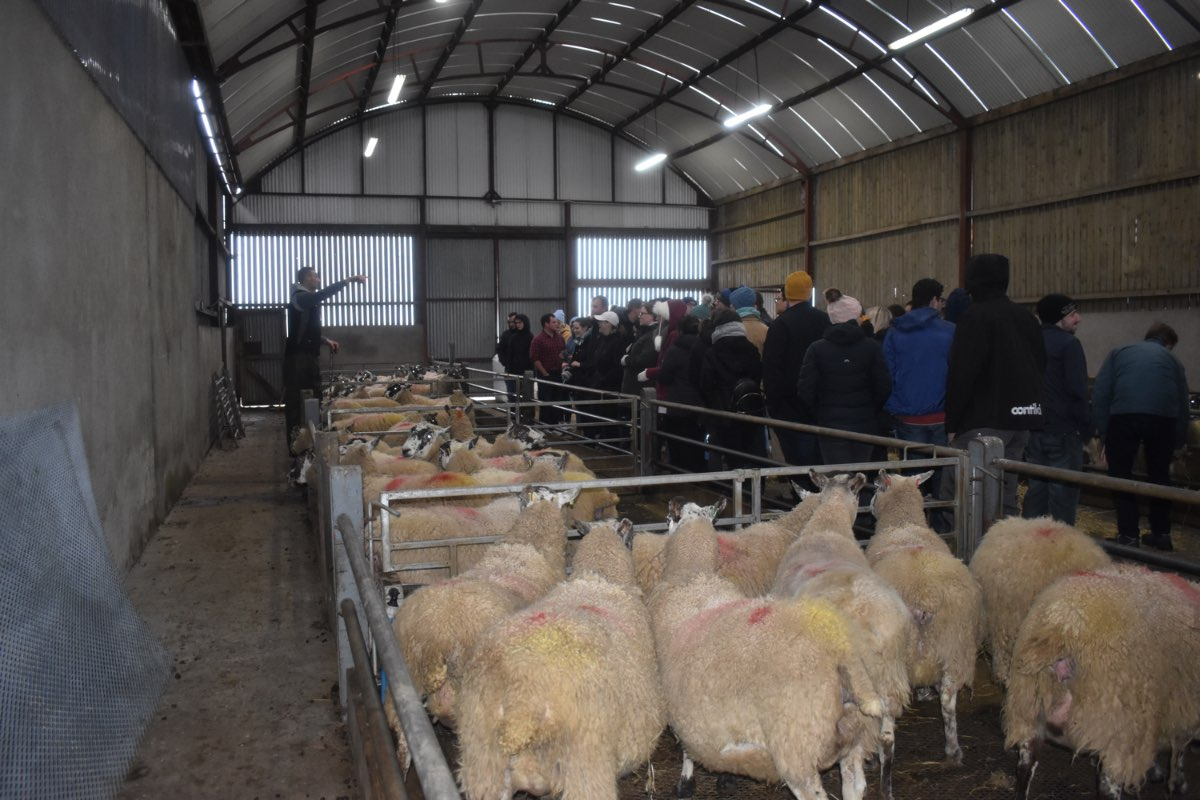 Glenshane Country Farm 29