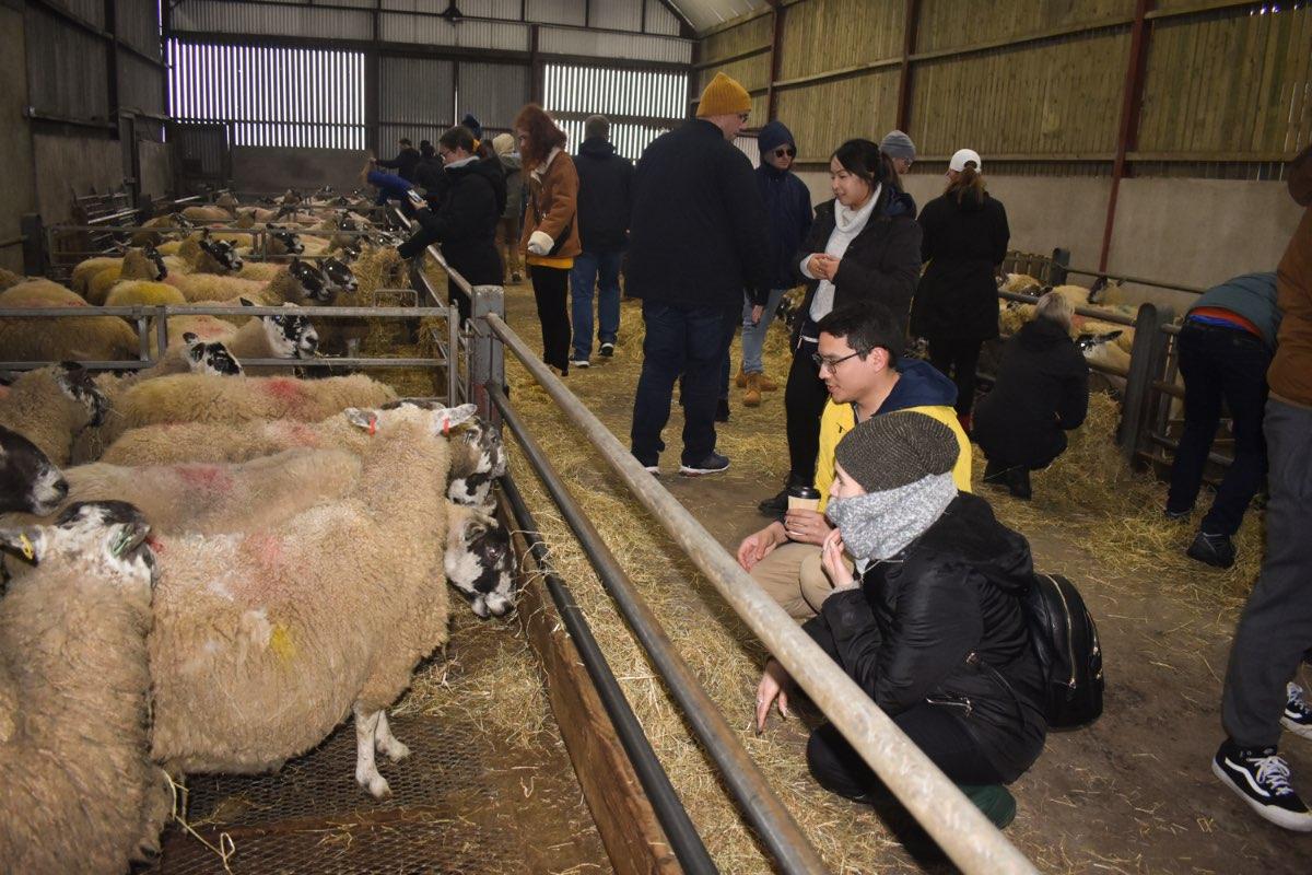 Glenshane Country Farm 31