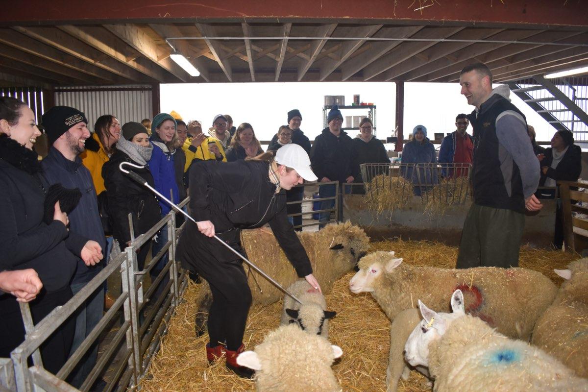 Glenshane Country Farm 33