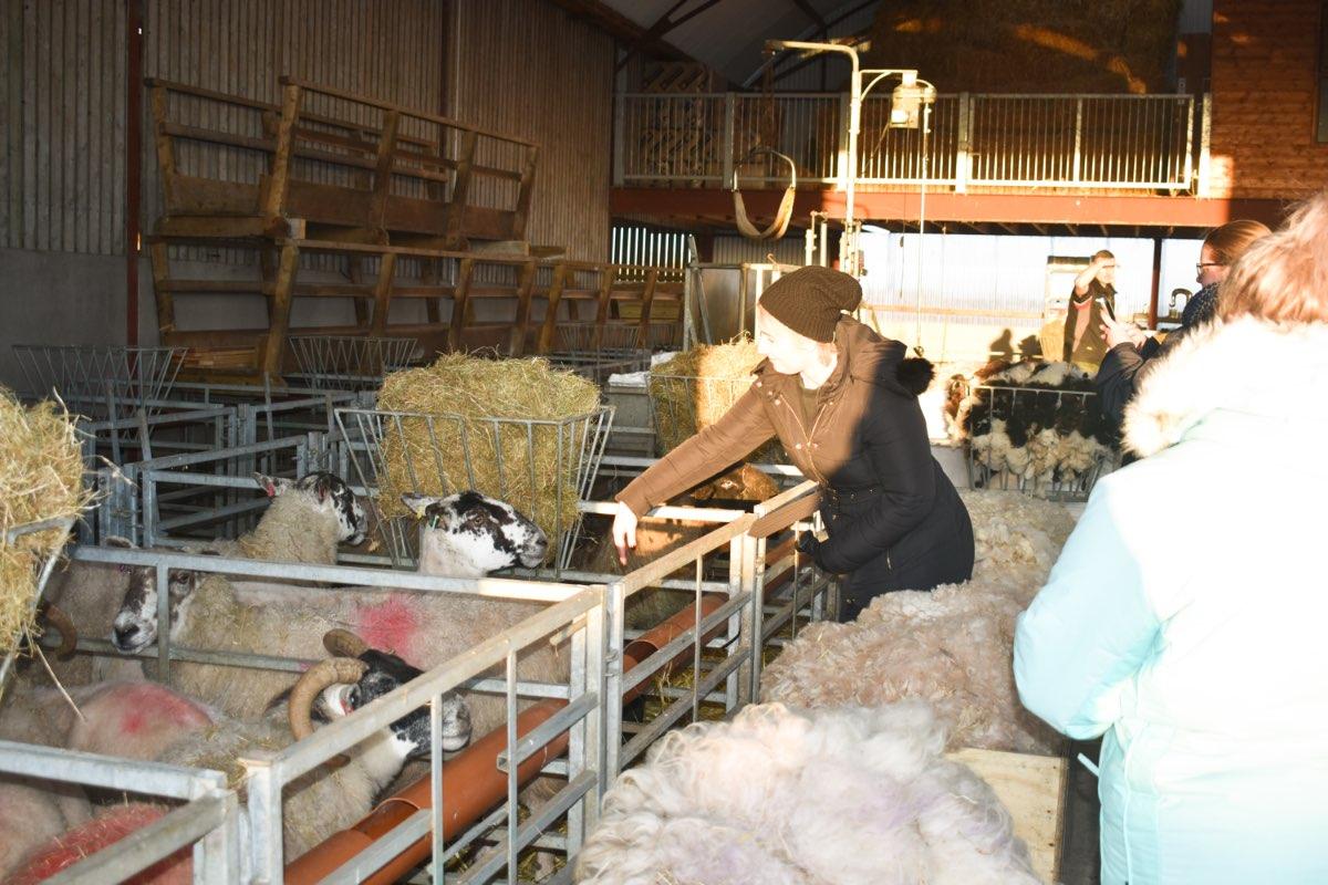 Glenshane Country Farm 40