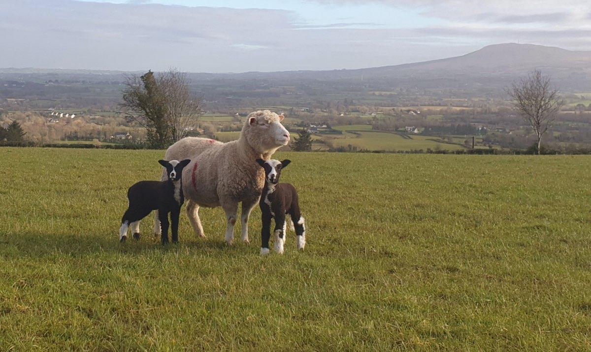 Glenshane Country Farm 5
