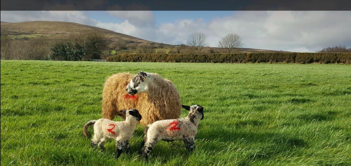 Glenshane Country Farm Animals 1