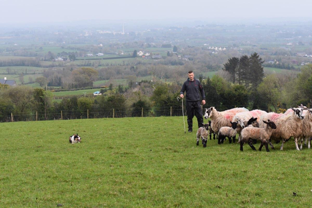 Glenshane Country Farm Animals 4