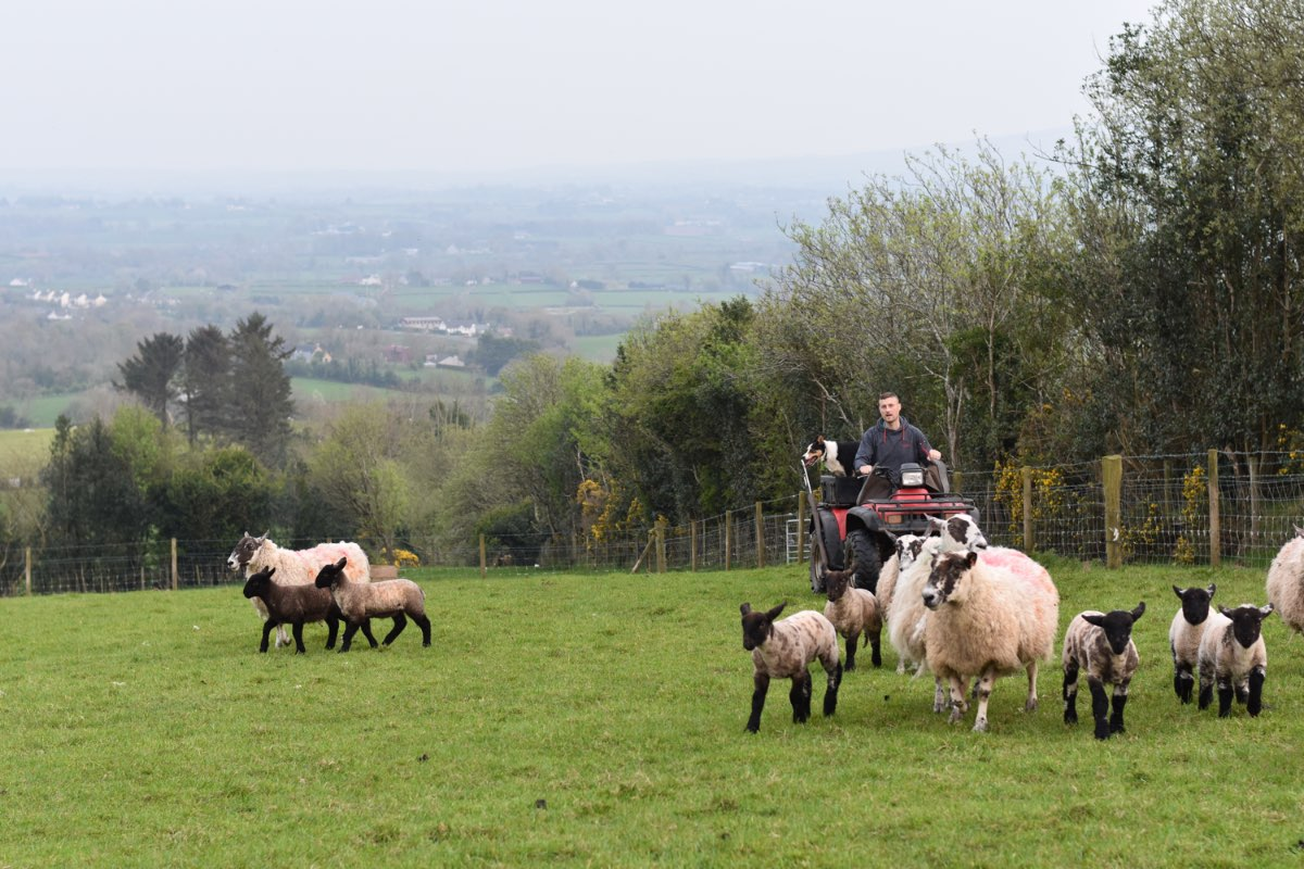 Glenshane Country Farm Animals 5