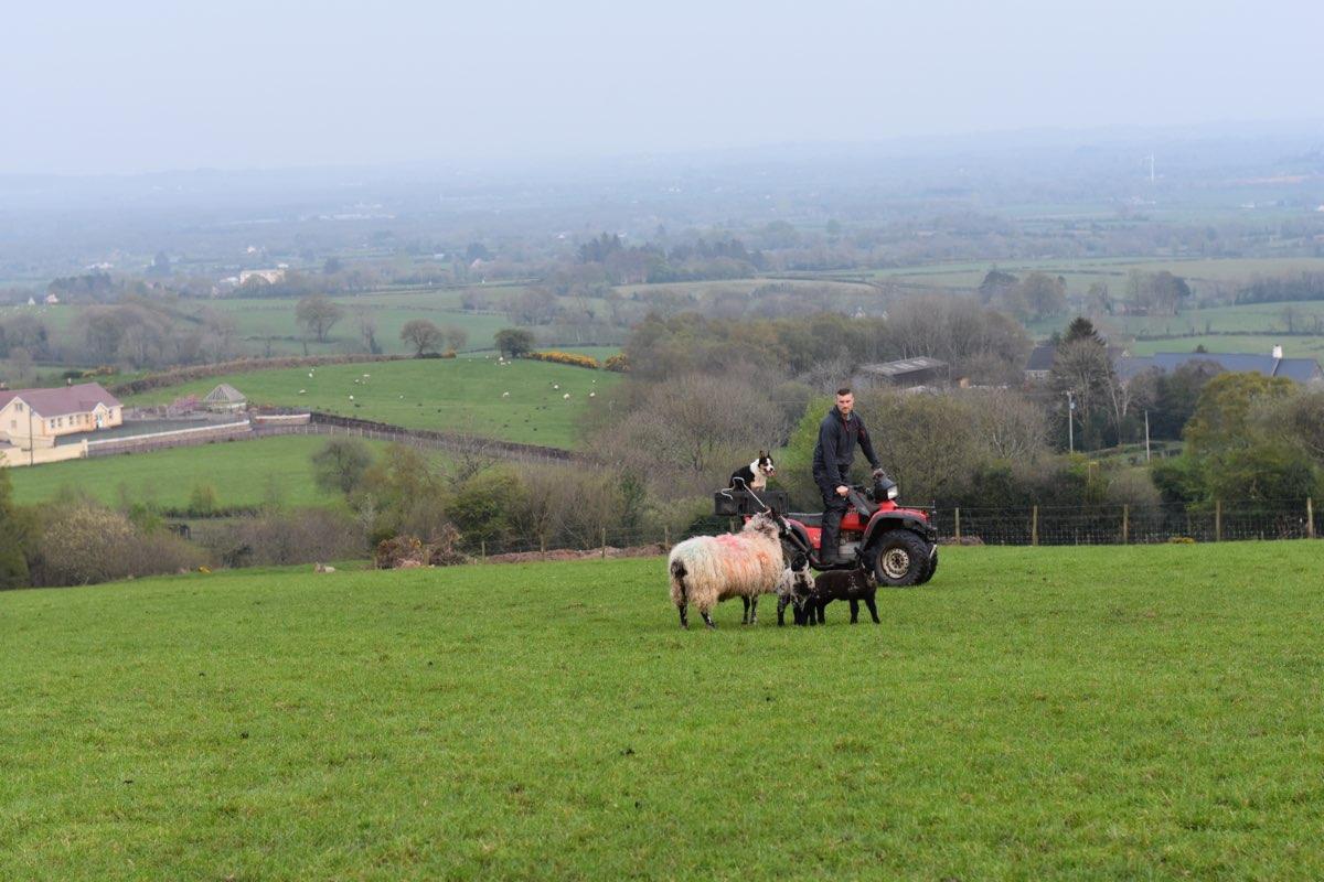 Glenshane Country Farm Animals 6