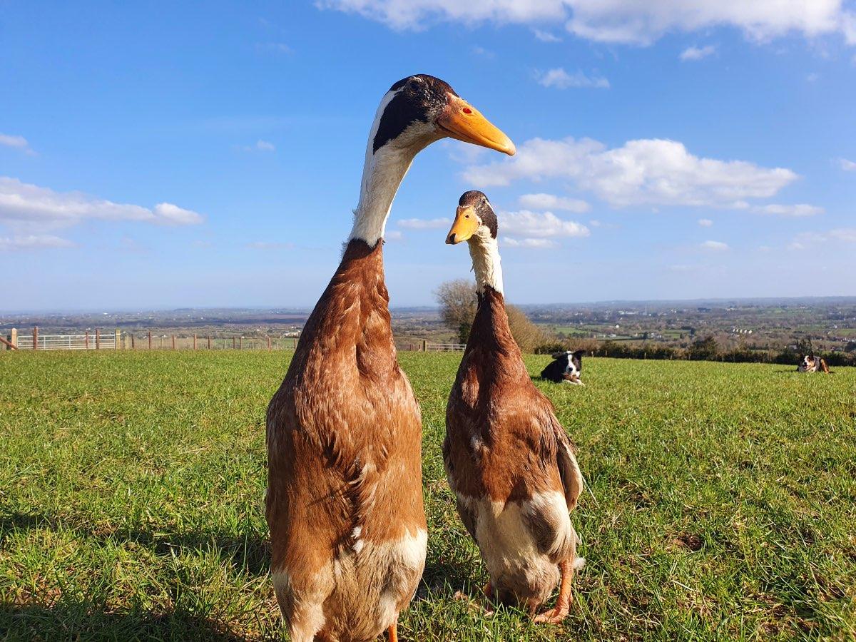 Glenshane Country Farm Animals 8